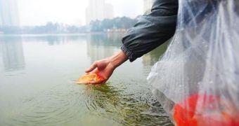 Thả cá, phóng sinh ồ ạt dịp lễ Tết - tạo phúc hay gây tội?