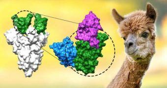Phát hiện kháng thể chặn được biến chủng Delta